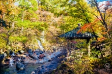 Un automne au Japon : nature, temples et momiji !