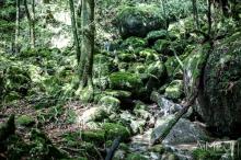 Yakushima, la forêt de Mononoke