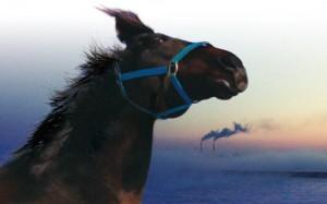 horses_of_fukushima_the