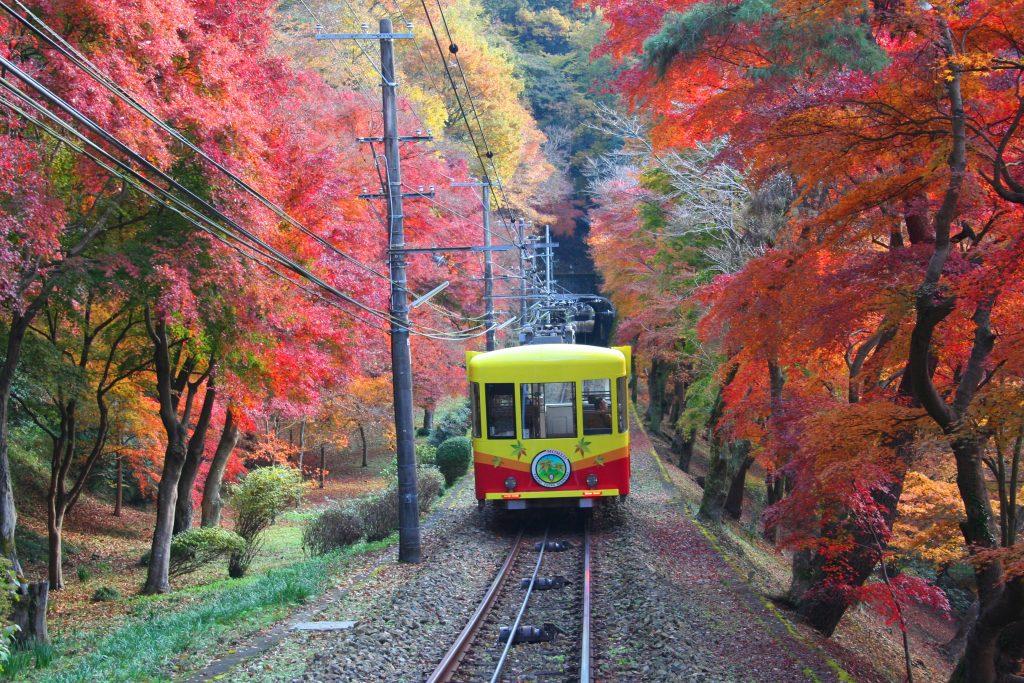 Le train du Mont Takao offre une belle approche des momiji. Crédits photo: Wattention