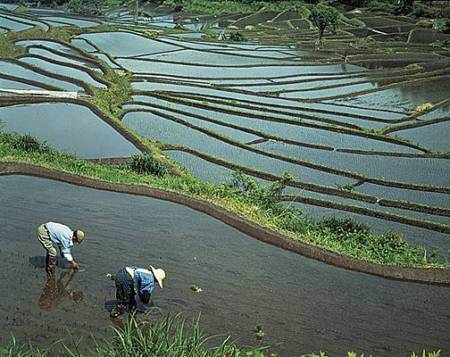 Agriculteur nippon