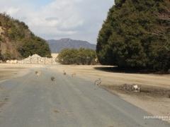 Okunoshima