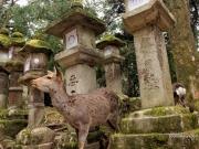 Kasuga Taisha, Nara