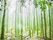Arashiyama Forêt de bambous