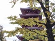 Japon Automne 2017-0298