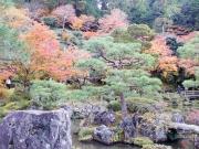 Culture, nature et nourriture : un automne au Japon