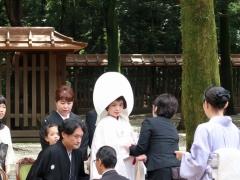 Japon Pape 2017--12