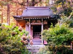 Momiji Japan