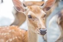 Visitez Nara en photo - Eté 2017