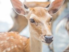 Daim Nara Park 1