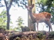 Daim Nara Park 3