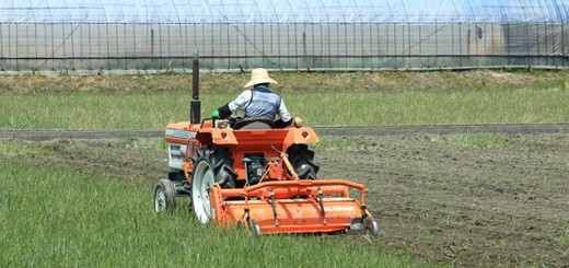 agriculture japonaise