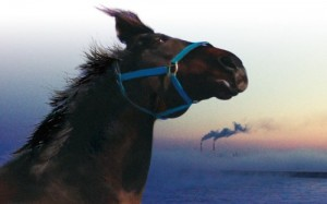 horses_of_fukushima_the