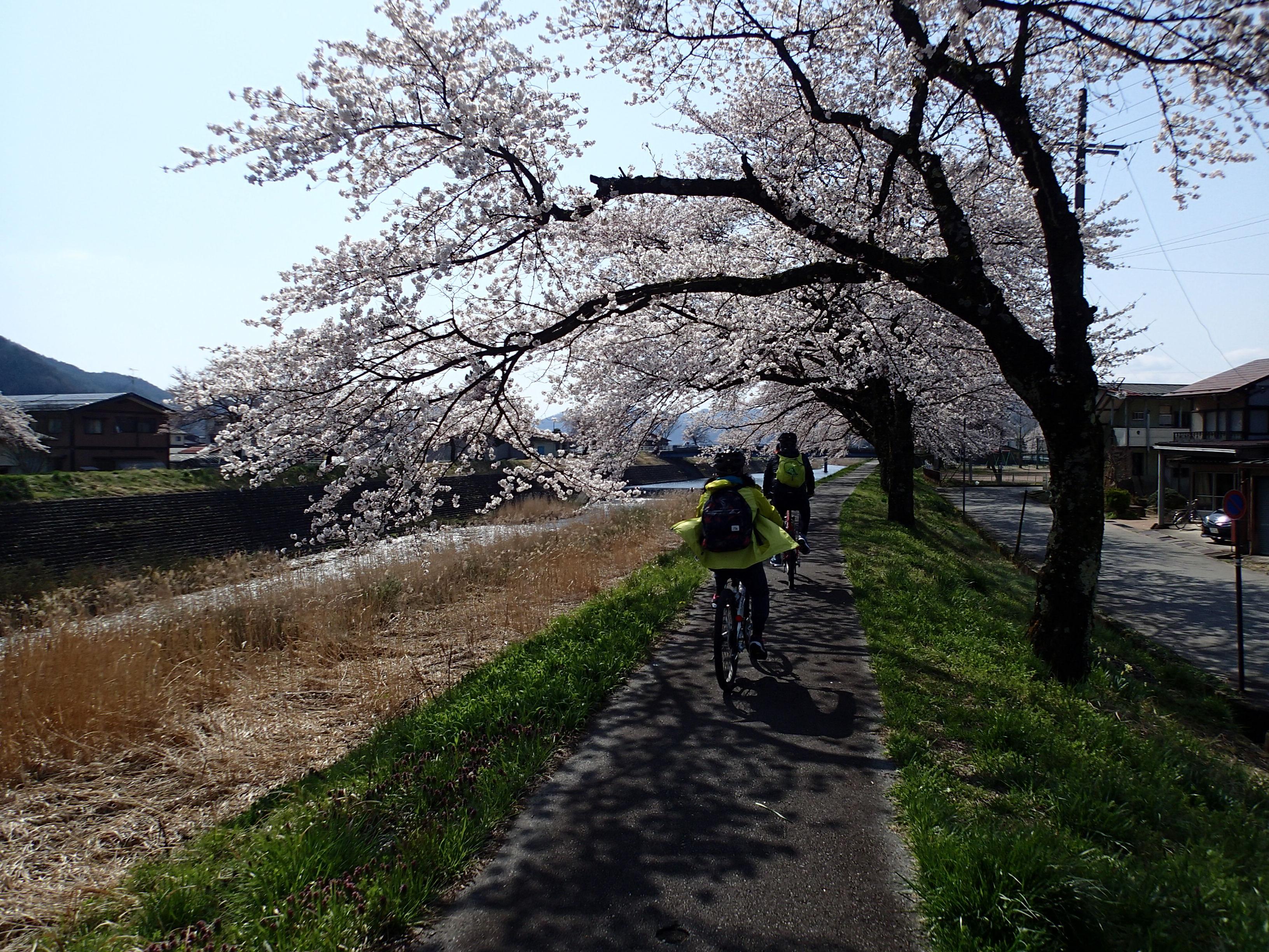 Randonnée à vélo sous les cerisiers