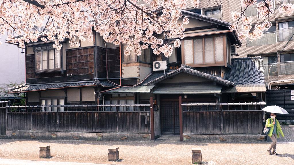kyoto, maison, bois, cerisier