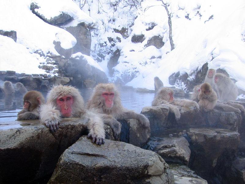 photo de Yosemite sur wikimedia commons