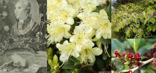 Botanistes japs