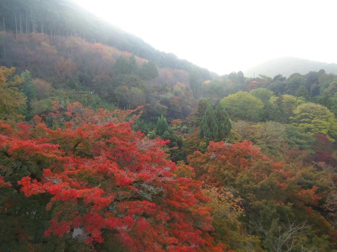 L'automne reste de loin ma saison préférée au Japon, en grande partie grâce aux érables rouges.