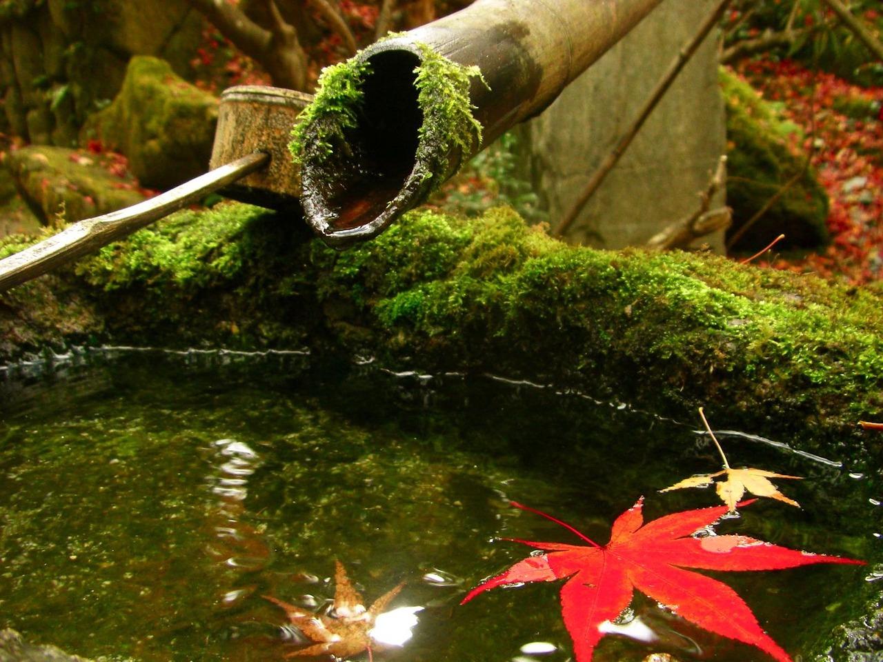 Brise Vue Jardin Japonais se composer un jardin japonais à la maison