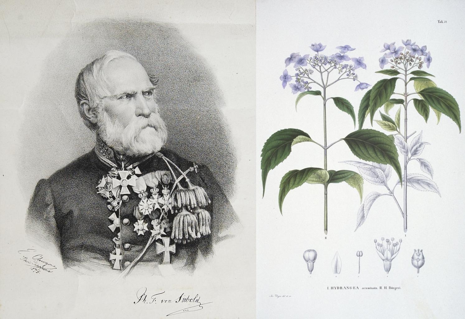 Philipp Franz von Siebold, auteur de Flora japonica