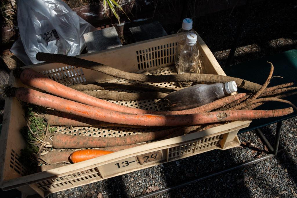La carotte longue d'Otsuka, utilisée de mille façons. Crédits photo : Pascal Voglimacci ©journaldujapon.com – Tous droits réservés.