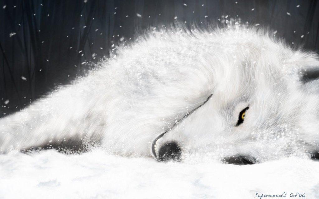 Wolf's Rain : anime du studio Bones