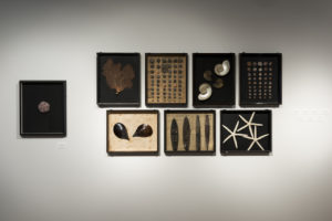 Différentes oeuvres sur le thème marin de Toshimasa Kikuchi