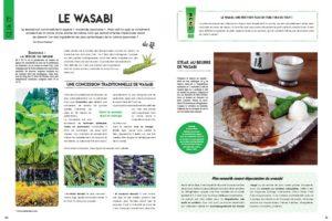 Japon gourmand pages intérieures wasabi
