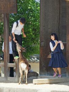 Collégiens en visite au Todai-ji à Nara