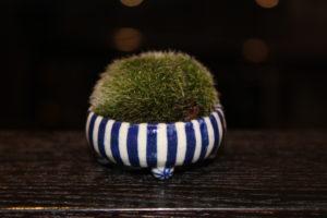 Un mini bonsaï pour Bonsaï Couture