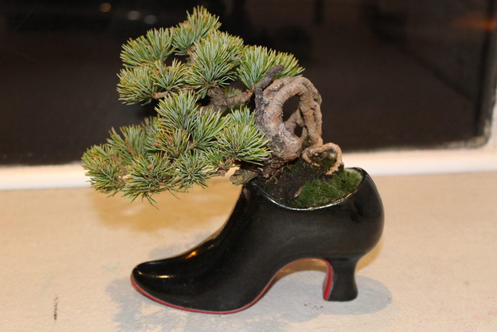 Pot en chaussure pour Bonsaï Couture