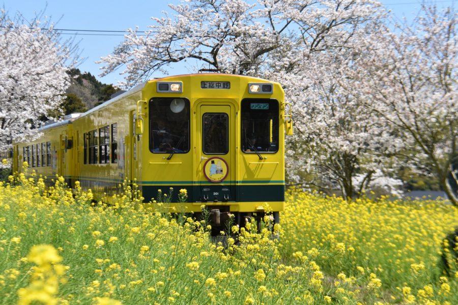 Train et nature japonaise