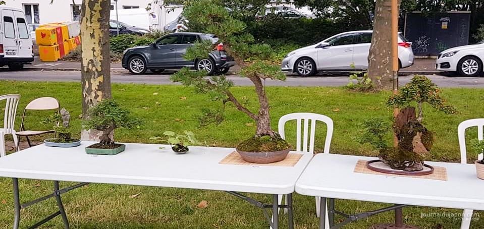 Une partie des bonsaïs exposés par Bonsaï Club de l'Iroise ©David Maingot pour Journal du Japon